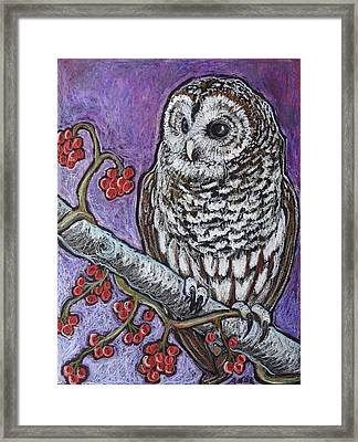 Barred Owl And Berries Framed Print by Ande Hall