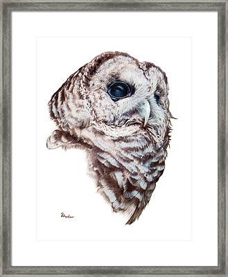 Framed Print featuring the drawing Barred Owl by Brent Ander