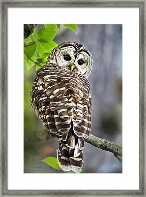 Framed Print featuring the photograph Barred Owl by Christina Rollo