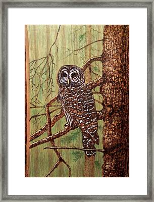 Barred Owl Framed Print by Danette Smith