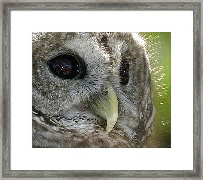 Framed Print featuring the photograph Barred Owl  by Geraldine Alexander