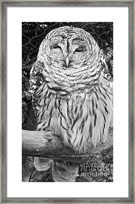 Framed Print featuring the photograph Barred Owl In Black And White by John Telfer