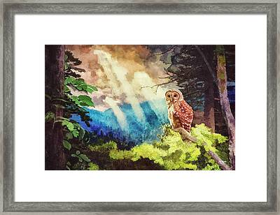 Barred Owl In The Mountains Framed Print