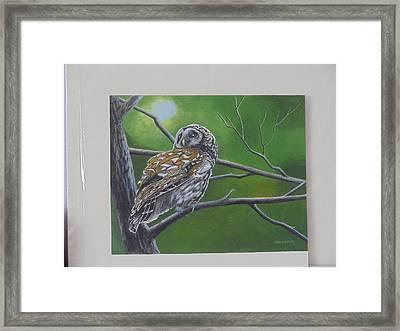 Barred Owl Framed Print by James Lawler