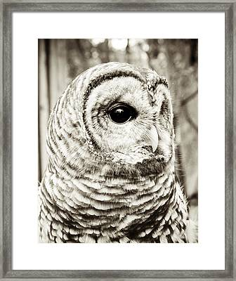 Barred Owl Framed Print by Olivia StClaire