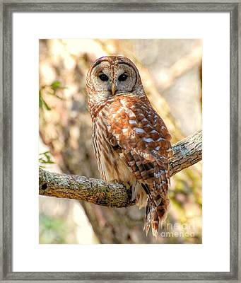 Framed Print featuring the photograph Barred Owl by Kathy Baccari