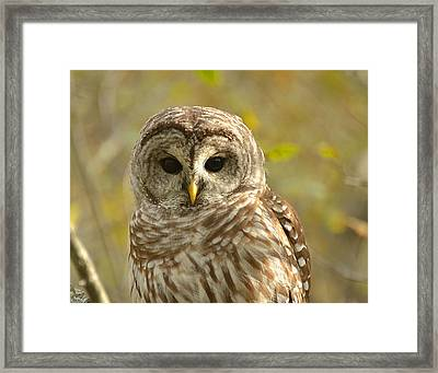 Barred Owl Framed Print by Nancy Landry