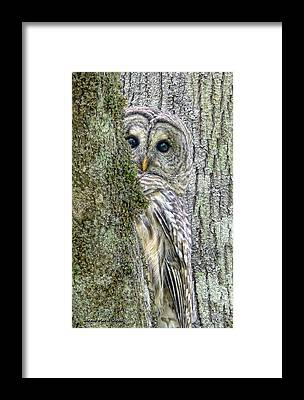 Lichen Framed Prints