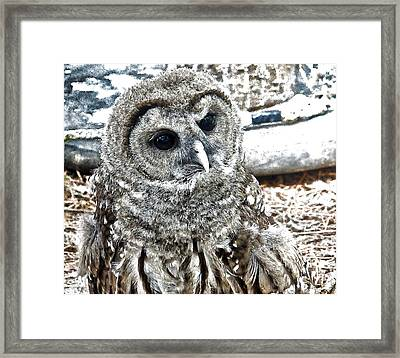Framed Print featuring the photograph Barred Owl Photo Art by Constantine Gregory