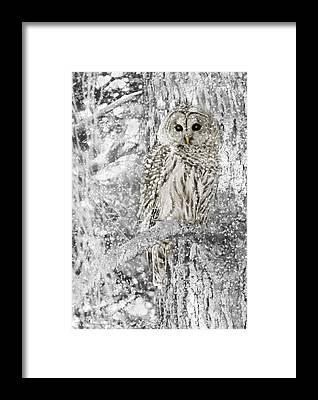 Barred Owl Framed Prints