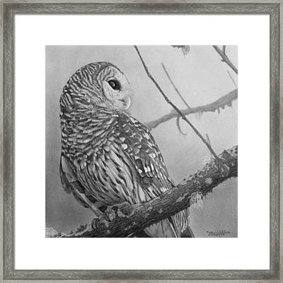 Barred Owl Framed Print by Tim Dangaran