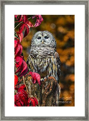 Barred Owl Framed Print by Todd Bielby
