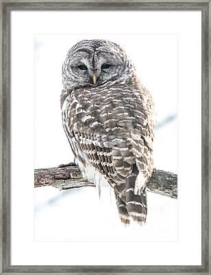 Barred Owl2 Framed Print