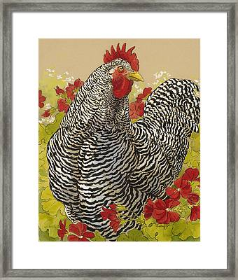 Barred Rock Rooster In The Geraniums Framed Print by Tracie Thompson