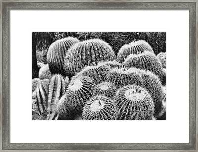Barrel Bunch Framed Print by Kelley King