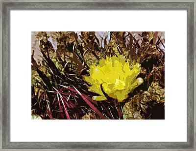 Barrel Cactus Bloom Framed Print by Jack McAward