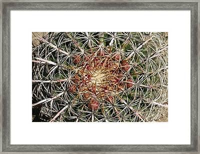 Barrel Cactus Framed Print by Ellen Henneke
