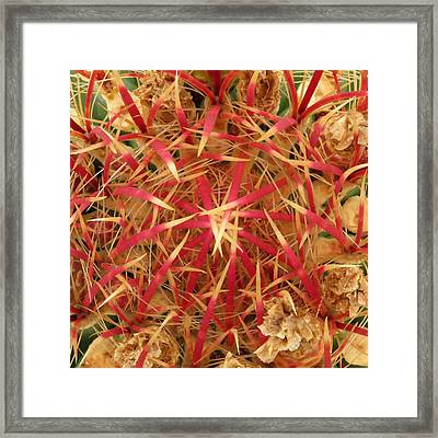 Framed Print featuring the photograph Barrel Cactus by Laurel Powell