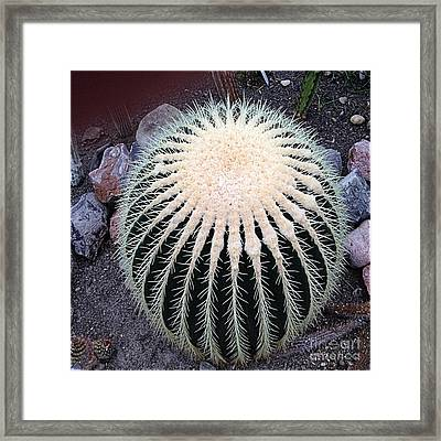 Framed Print featuring the photograph Barrel Cactus by Luther Fine Art