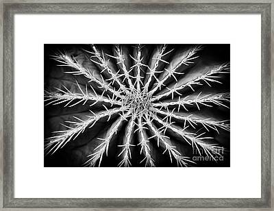 Barrel Cactus Framed Print by Tim Gainey