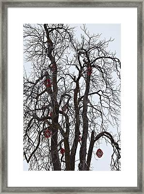 Barren Beauty Framed Print