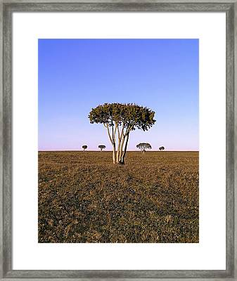 Barren Tree Framed Print