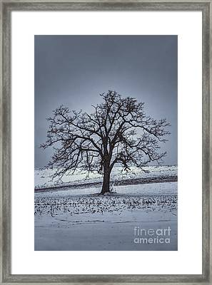 Barren Winter Scene With Tree Framed Print