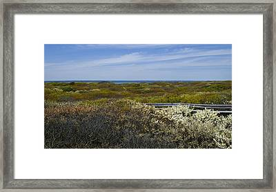 Barrier Island In Springtime Framed Print
