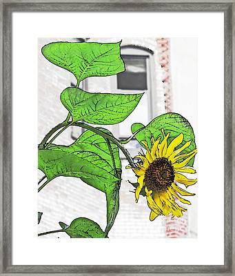 Barrio Sunflower Framed Print by Sarah Loft