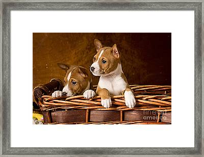 Basenji Puppies Framed Print