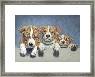 Basenji Puppies Framed Print by Ruth Seal