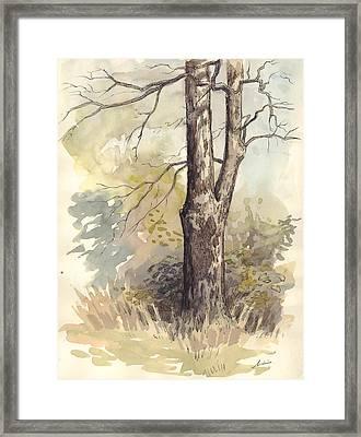 Bashful Framed Print by Jaimie Whitbread