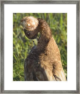 Bashful Framed Print by Kimberly Danner