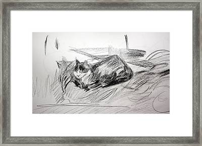 Bashful Pencil Study Framed Print by Anita Dale Livaditis