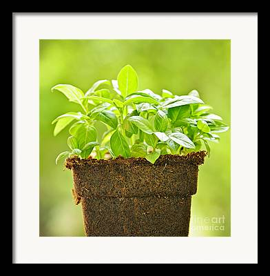 Potted Plants Framed Prints