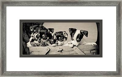 Basket Of Chi Framed Print