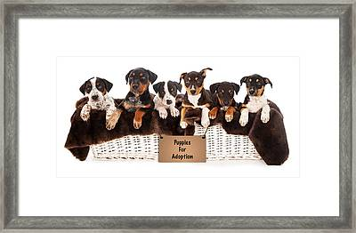 Basket Of Mixed Breed Puppies Framed Print by Susan Schmitz