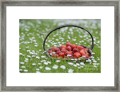 Basket Of Strawberries Framed Print by Tim Gainey
