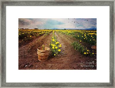Framed Print featuring the photograph basket with Daffodils by Sylvia Cook