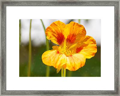 Basking 5x7 Framed Print by Pamela Gail Torres