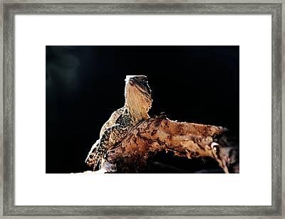 Basking Dragon Framed Print