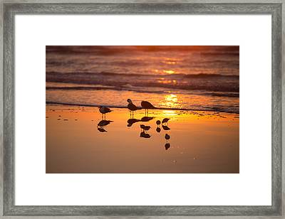 Framed Print featuring the photograph Basking In Sunshine by Sharon Jones