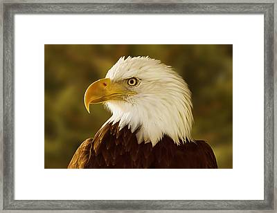 Framed Print featuring the digital art Basking In The Evening Glow  by Brian Cross