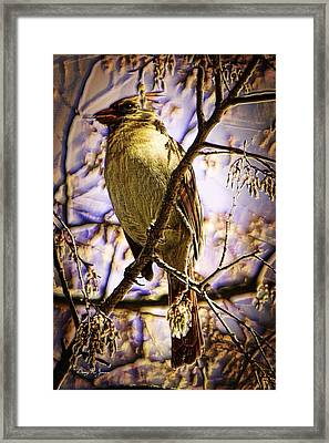 Basking In The Glow Framed Print by Barry Jones