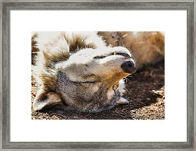 Framed Print featuring the photograph Basking In The Sun by Brian Cross