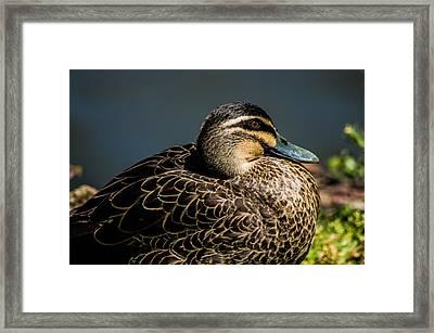 Basking In The Sun Framed Print