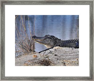 Basking On The Beach Framed Print by Al Powell Photography USA