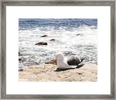 Basking Seagull Framed Print by Juan Romagosa
