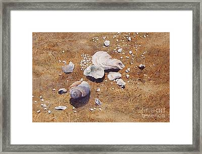 Framed Print featuring the painting Bass River Seashells by Karol Wyckoff