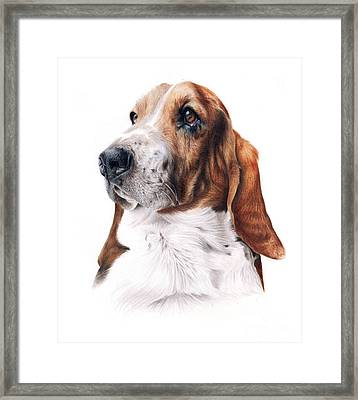 Basset Hound Framed Print by Jessica  Lennox